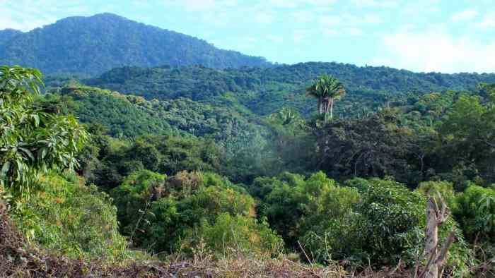 Image of the jungle near La Bajada, Mexico.