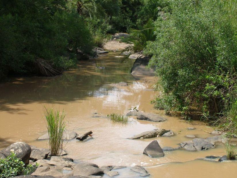 a Nile Crocodile in hluhluwe-imfolozi, south africa