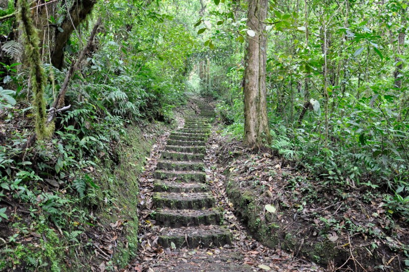 steps on a trail, monteverde cloud forest preserve, costa rica