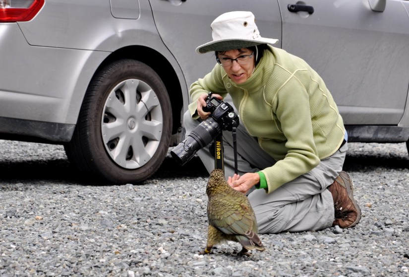 jean and a kea parrot, fiordland national park, south island, new zealand
