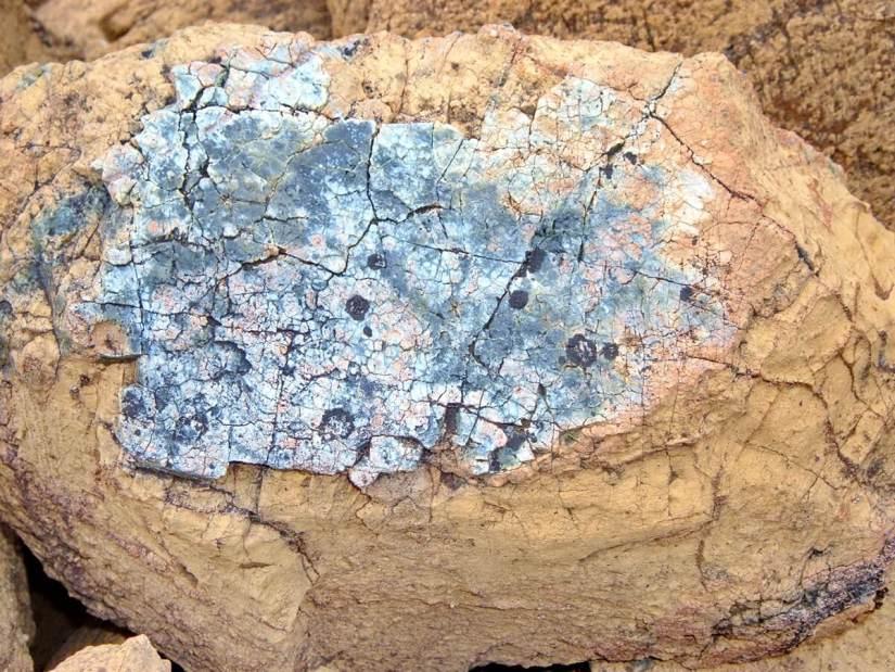 serpentine pattern on peridotite rock, the tablelands, newfoundland, canada