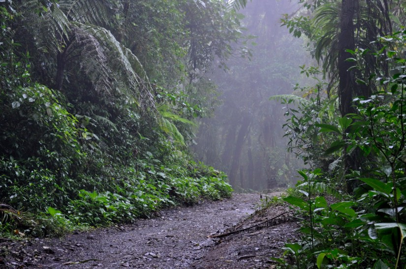 a trail, monteverde cloud forest preserve, costa rica