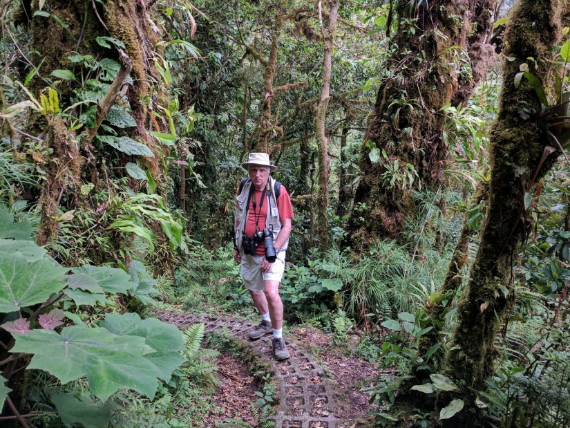 bob in the cloud forest, monteverde, costa rica