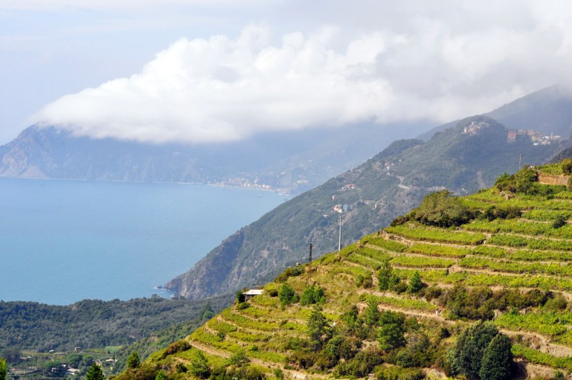 terraced gardens and clouds, cinque terre, italy