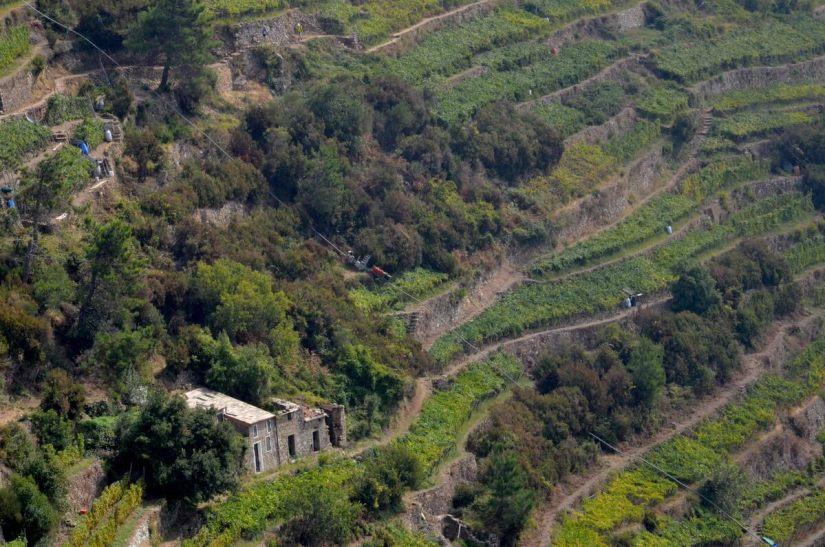 terraced vineyards near volastra, cinque terre, italy