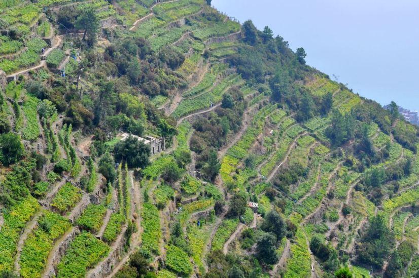 muretti, dry stone walls, cinque terre, italy