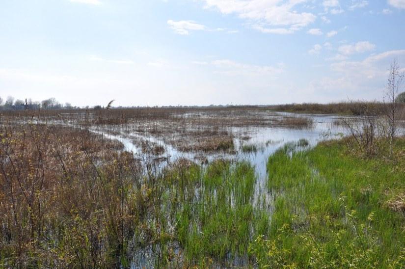 crown marsh, long point, ontario