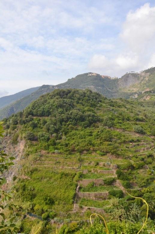 terraced slopes, san bernardino, cinque terre, italy