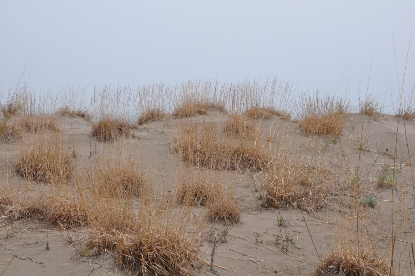 sand dunes, the tip of long point, lake erie, ontario