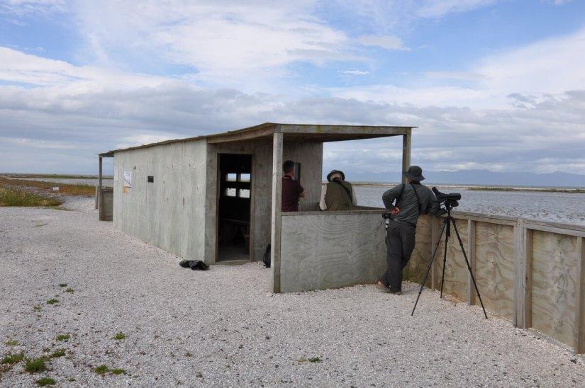 bird blind, Pukorokoro Miranda Shorebird Centre, north island, new zealand