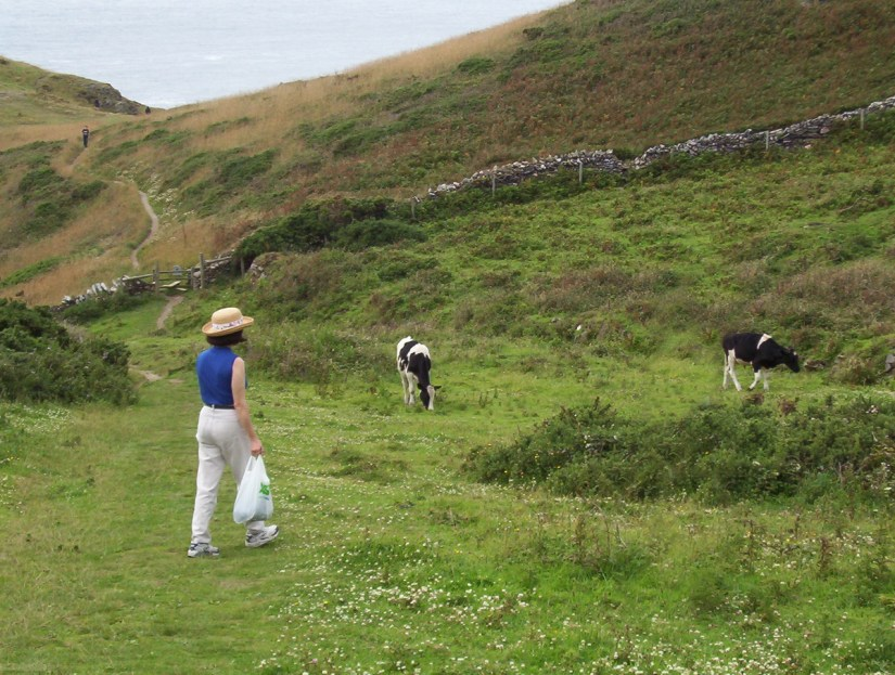jean hiking through the paddocks, tintagel, cornwall, england
