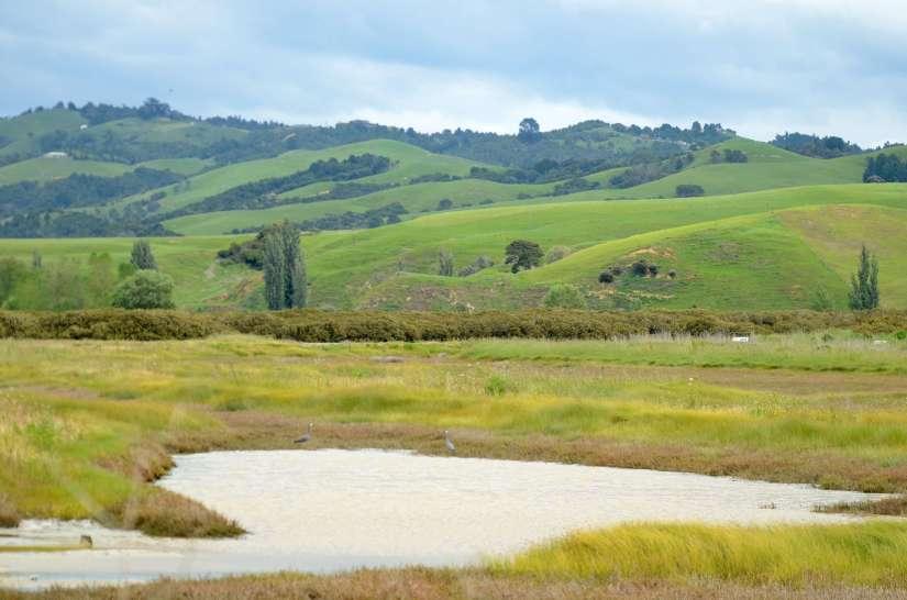 saltmarsh and mountains, Pukorokoro Miranda Shorebird Centre, north island, new zealand