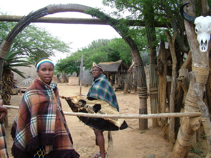 a zulu warrior with a warm shield, shakaland, kwazulu-natal, south africa