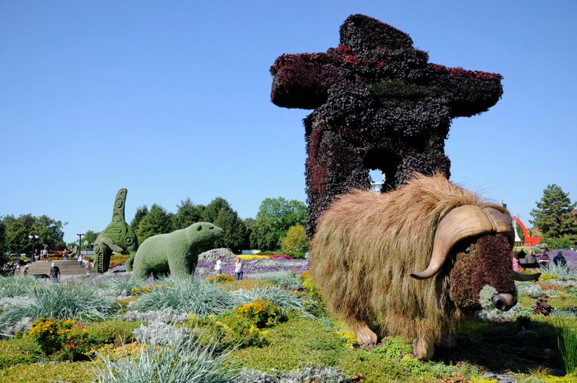 a musk ox, mosaiculture 2018, gatineau, quebec, canada