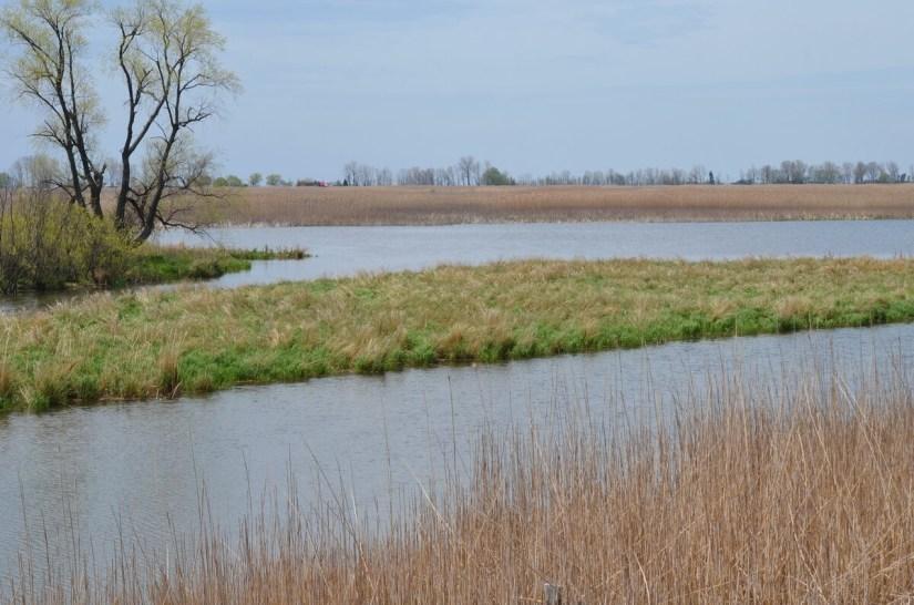 big creek national wildlife area, long point, ontario