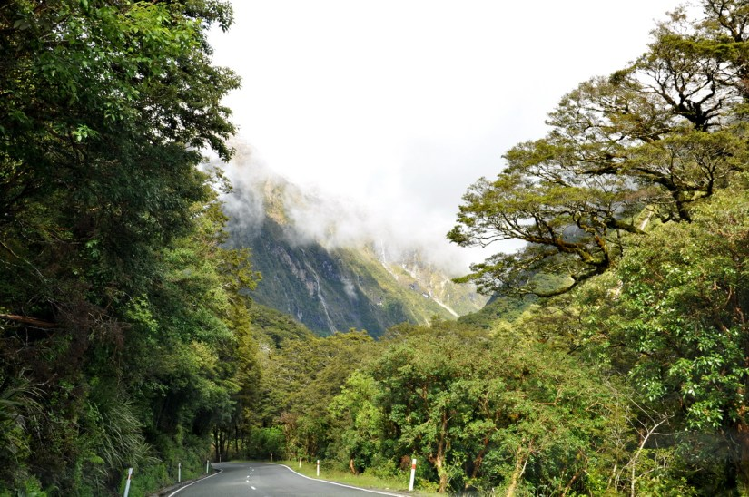 mountains and trees, fiordland national park, south island, new zealand