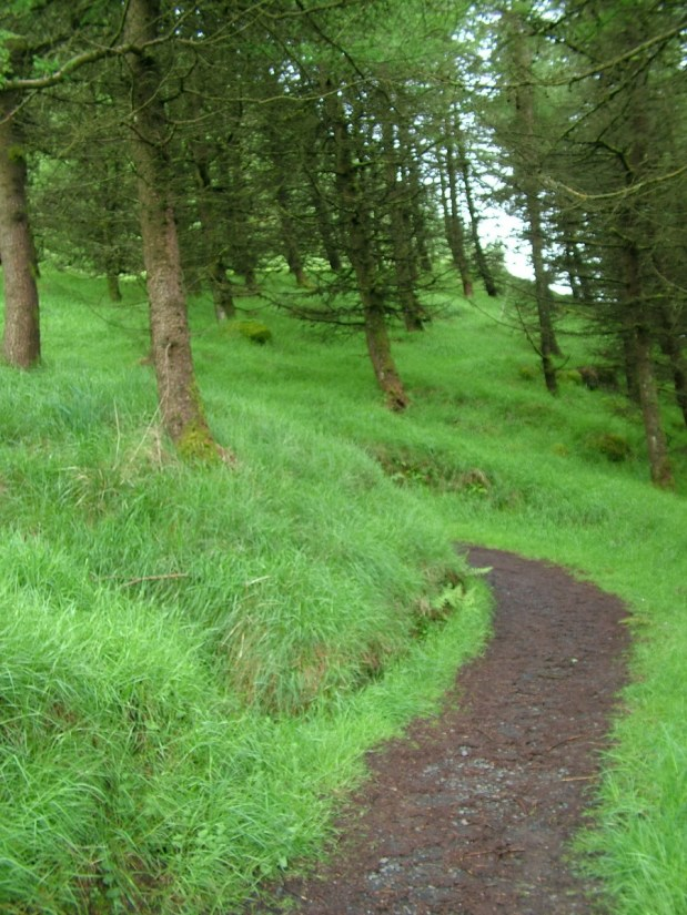 evergreen forest trail, glenariff forest park, northern ireland