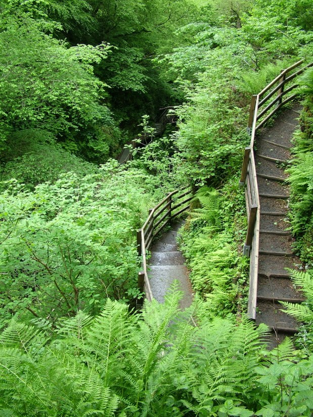 switchback trail, glenariff forest park, northern ireland
