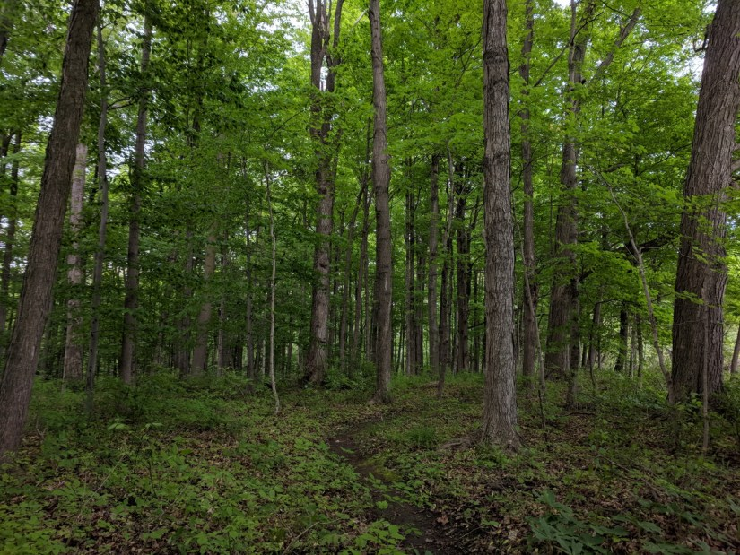 a forest in rouge national urban park, toronto