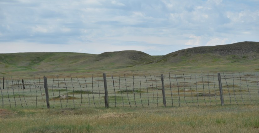 prairie dog town, grasslands national park, saskatchewan