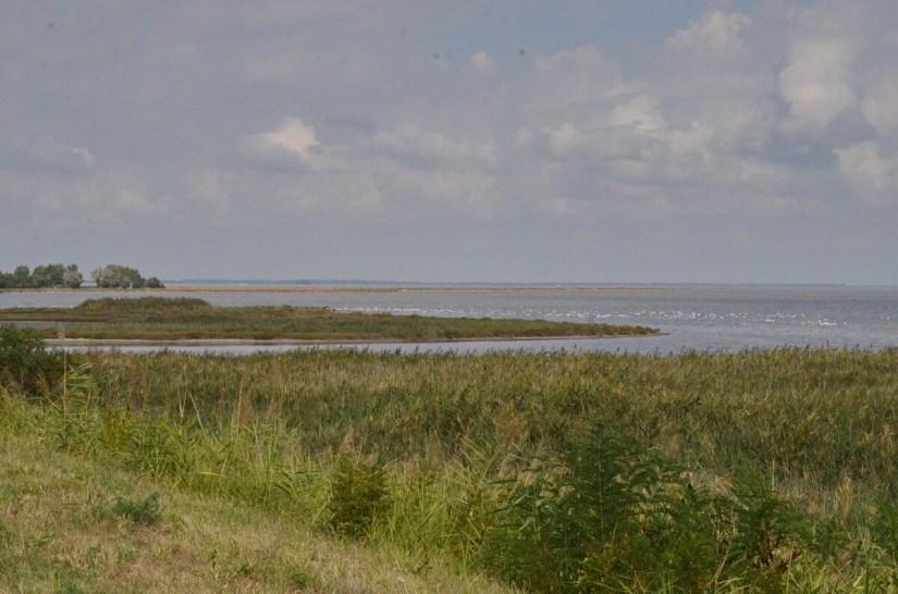 greater flamingo colony, valli di comacchio, italy
