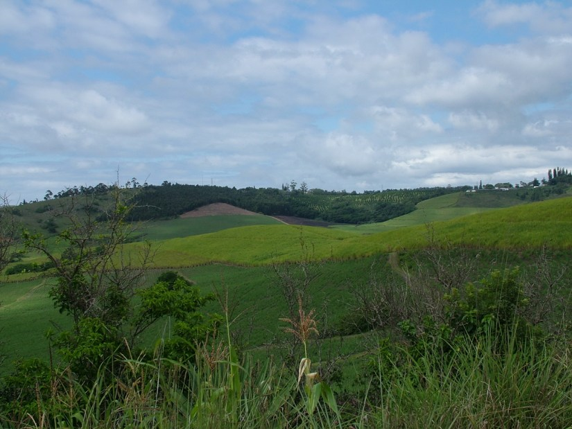 farm fields, KwaZulu-Natal, South Africa