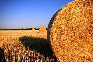 straw-bales-726977_960_720