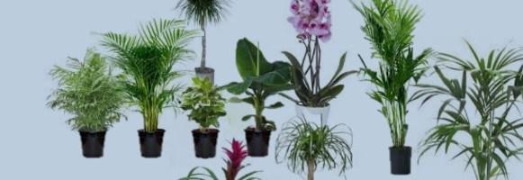 10 piante per purificare l'aria di casa!
