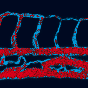Turquoise and Coral © Dario Donnarumma, Laboratoire Charles Coulomb UMR 5221 CNRS-UM