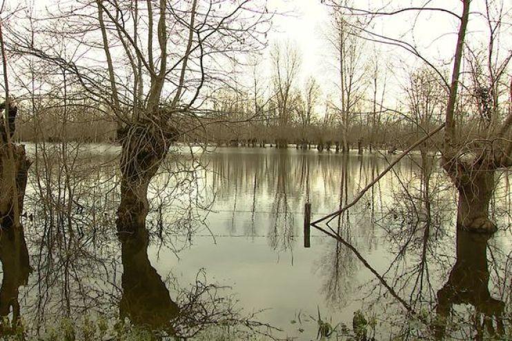 Le frêne têtard, l'arbre emblématique du Marais poitevin