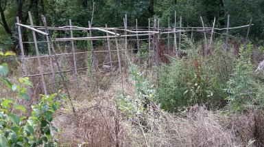 Veg patch canes