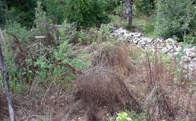 Veg patch overgrown