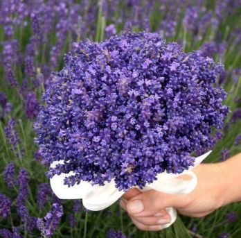 bouquetmauve3