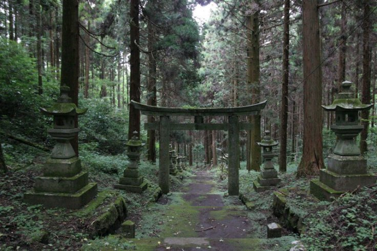 Forest-Shrine-in-Japan-1.jpg