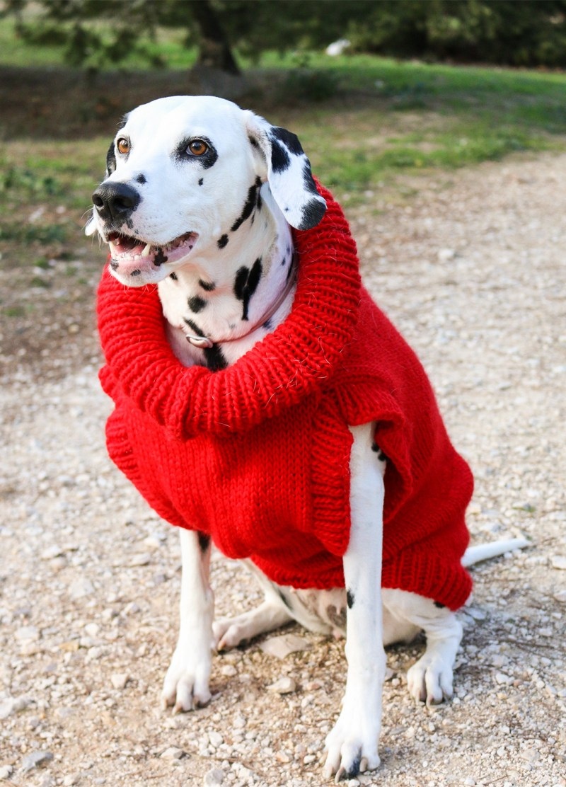 scooby dog sweater