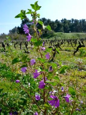 purple tall weeds