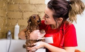 7 Benefits of Using a Self-Service Dog Wash