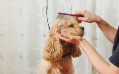 What Do the Numbers of the Pet Care Industry Look Like?