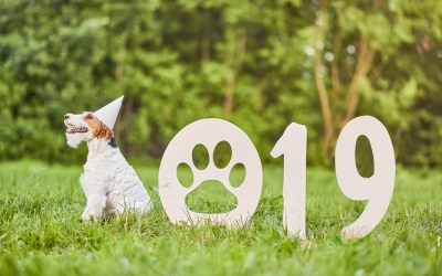 Wag N' Wash Celebrates a Strong Year and Looks Ahead to 2019