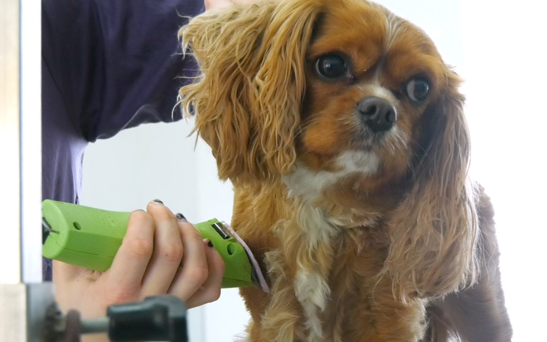 Here is How You Can Start Your Own Dog Grooming Franchise with Wag N' Wash