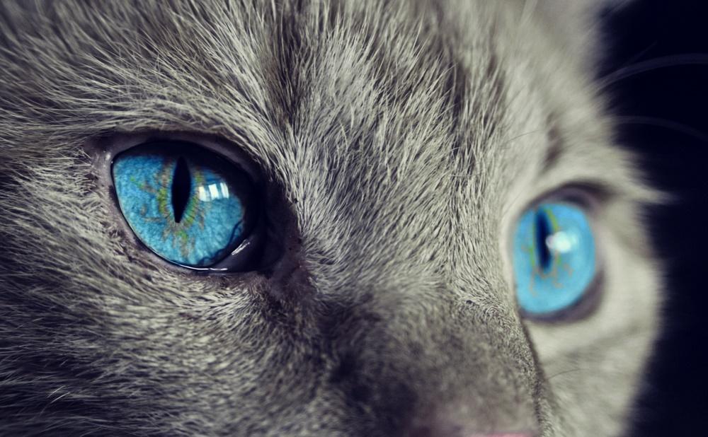 chat merveilleux