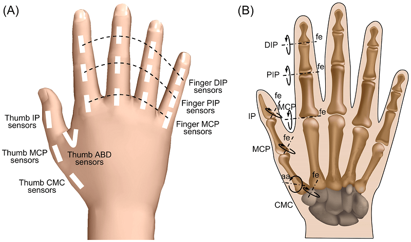 Unique Thumb Anatomy Ligaments Gallery - Anatomy And Physiology ...