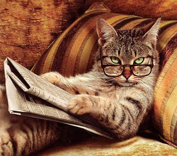 cat-reading-the-newspaper3