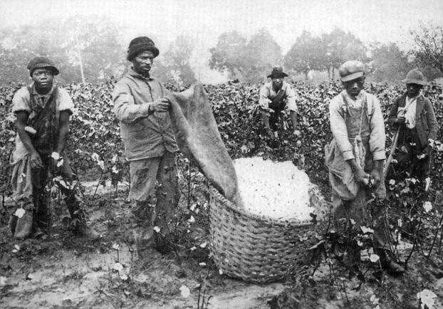 cotton-pickers-1