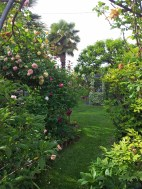 Questo giardino - 3
