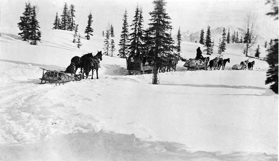Photograph of horses and sleighs in the wintertime.