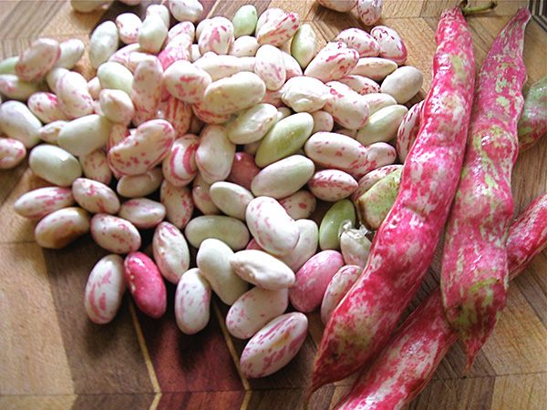 Ellen Kanner Breaks out the Beans to Celebrate the International Year of Pulses