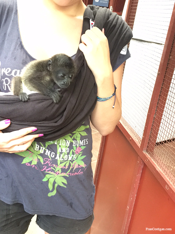 An orphaned baby monkey at the rescue center