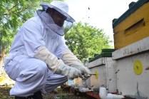 SRU-046-2018.-Gobierno del Estado retoma el areteo de colmenas como una medida de ordenamiento (1)