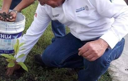 Encabeza Memo Verlage Jornada de Reforestación en Graciano Sánchez